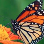 Counting Of Butterflies Will Also Be Held In Jammu And Kashmir, 'Big Butterfly Month: India 2020' Will Be Organized From Today