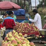 700 Apple Trucks Leave Jammu And Kashmir After Trade Restrictions Eased